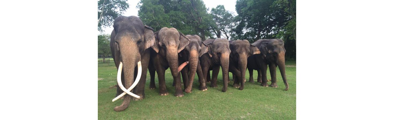 2012 Victory Kingpin | Two Tales Ranch Elephants